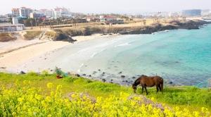 Tour du lịch đảo Jeju Hàn Quốc 4 ngày 3 đêm
